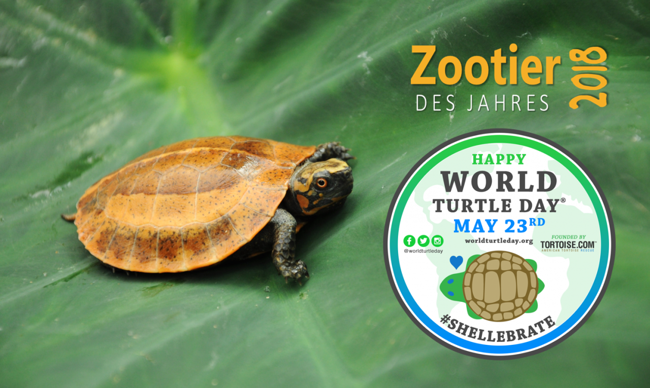 World-Turtle-Day